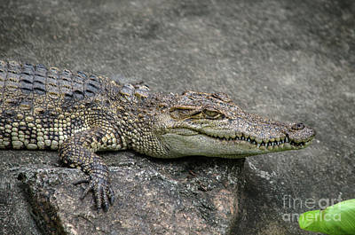 Photograph - Croc by Michelle Meenawong