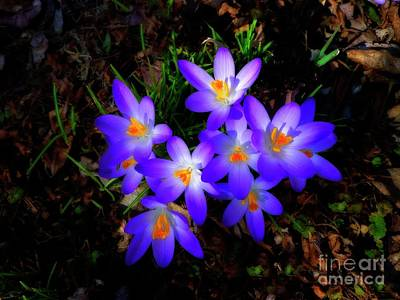 Photograph - Croci Surreal by Dee Flouton