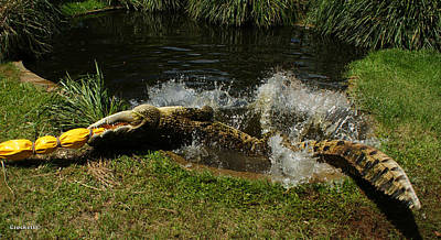 Photograph - Crocodile Death Roll by Gary Crockett
