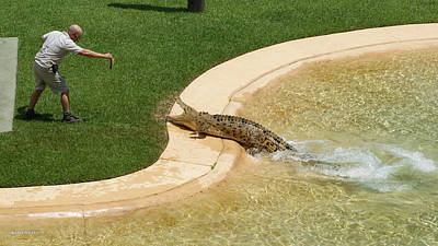 Photograph - Crocodile From Australia Zoo by Gary Crockett