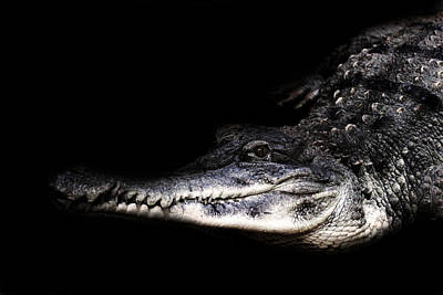 Shadows And Light Photograph - Crocodile by Martin Newman