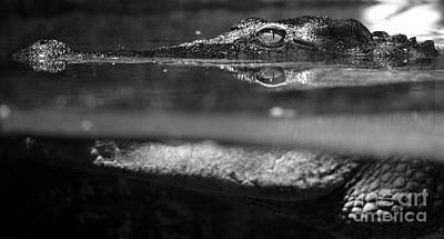 Photograph - Crocodile Profile Above And Below Water Surface Black And White by Shawn O'Brien