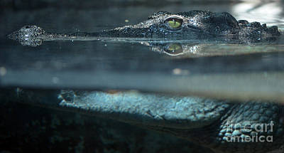 Photograph - Crocodile Profile Above And Below Water Surface by Shawn O'Brien