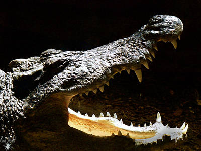 Father Photograph - Crocodile by Scott Hovind