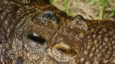 Photograph - Crocodile Skin Body Armour 2 by Gary Crockett
