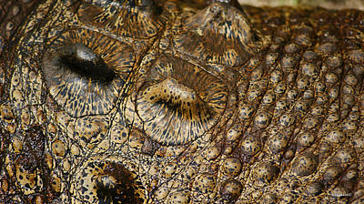 Photograph - Crocodile Skin Body Armour by Gary Crockett