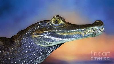 Digital Art - Crocodile Smile by Suzanne Handel