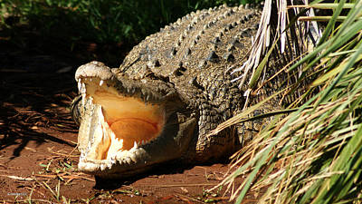 Photograph - Crocodile Sunbaking by Gary Crockett
