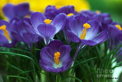 Painting - Crocus by AmaS Art