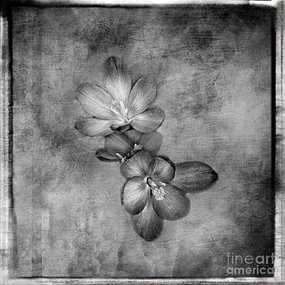 Just Desserts - Crocus Black and White Artistic Print by Gwen Gibson