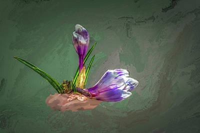Digital Art - Crocus #h2 by Leif Sohlman