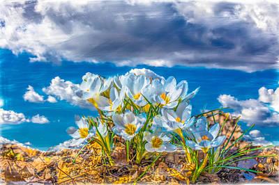 Photograph - Crocus Sky by Leif Sohlman