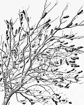 Photograph - Cronulla Tree No. 62-1 by Sandy Taylor