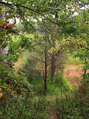 Photograph - Crooked Creek Woods by Kimberly Mackowski