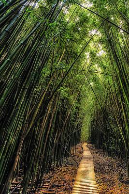 Photograph - Crooked Path by Chuck Jason