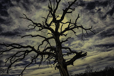 Photograph - Crooked Sky by David Longstreath