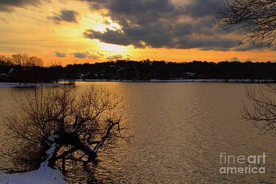 Photograph - crooked tree at Sunset by Lennie Malvone