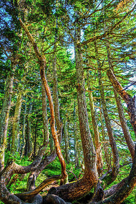 Crooked Trees Of Mt Roberts Art Print