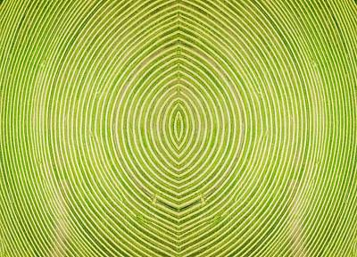 Photograph - Crop Circle by Rand