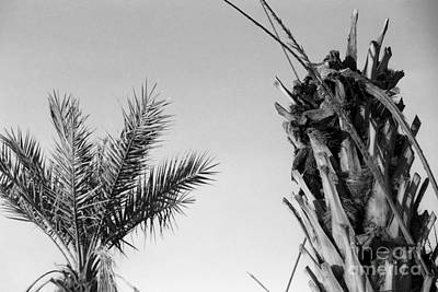 Photograph - Crop Top Palm by Heather Kirk