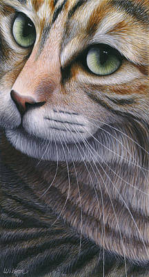 Tabby Cat Painting - Cropped Cat 2 by Carol Wilson