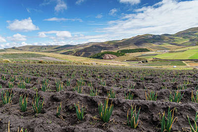 Photograph - Crops In The Andes by Alexandre Rotenberg