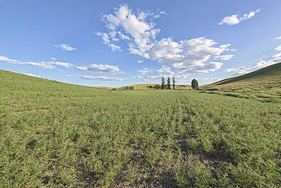 Photograph - Crops by Jon Glaser
