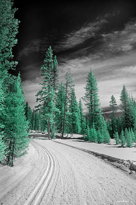 Photograph - Cross Country Ski Path by Jamieson Brown