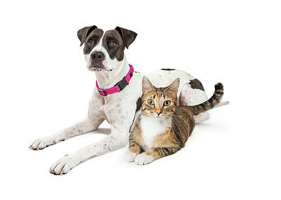 Photograph - Crossbreed Dog And Tabby Cat Lying Down Together by Susan Schmitz