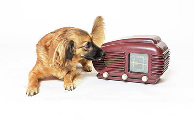 Photograph - Crossbreed Dog Is Listening A Vintage Radio  by Jaroslav Frank