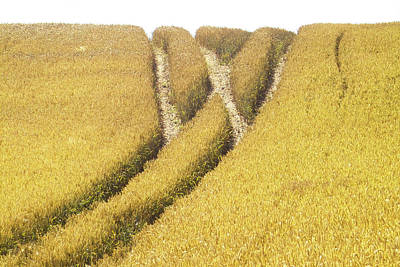 Cornfield Photograph - Crossed Lanes On Cornfield by Heiko Koehrer-Wagner