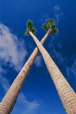 Crossed Palm Trees Art Print by Rich Iwasaki