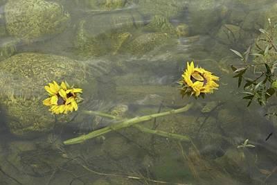 Derek Russell Wall Art - Photograph - Crossed Sunflower  by Derek Russell