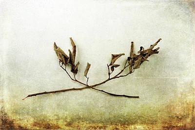 Photograph - Crossing Harmony by Randi Grace Nilsberg