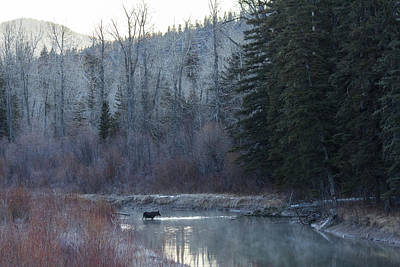 Photograph - Crossing the Blackfoot by Laurie Pelham
