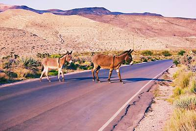 Photograph - Crossing The Desert Road by Tatiana Travelways