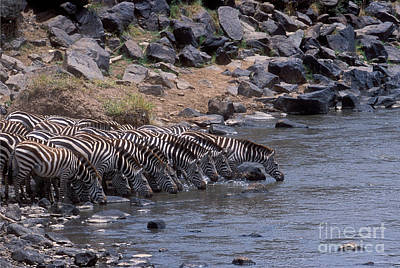 Photograph - Crossing The Mara River by Sandra Bronstein