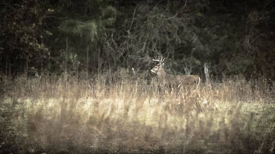 Deer Photograph - Crossing The Meadow by Garett Gabriel