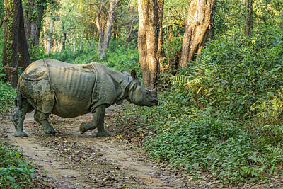 Greater One Horned Rhino Photograph - Crossing The Road by Lindley Johnson