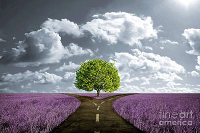 Crossroad In Lavender Meadow Original