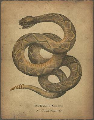Boa Constrictor Drawing - Crotalus Cascavella by Sergey Lukashin