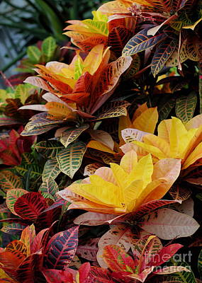 Photograph - Croton by Angela Rath