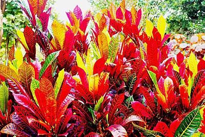 Photograph - Croton by Dora Hathazi Mendes