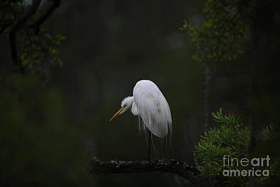 Photograph - Crouching Heron by Dale Powell
