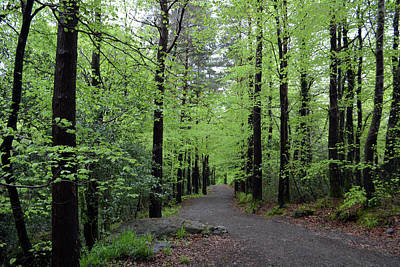 Photograph - Crough Wood, Comeragh Mountains Waterford Ireland  .jpg by Terence Davis