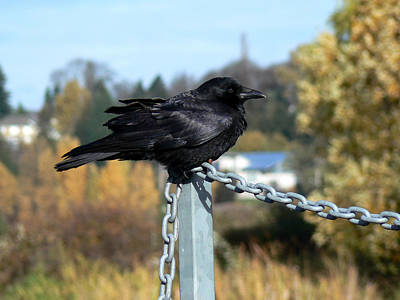 Crow Art Print by Anastasia Michaels