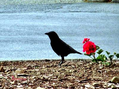 Photograph - Crow And Geranium by Sadie Reneau