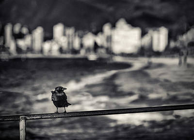 Photograph - Crow And Vancouver Skyline by Peter V Quenter