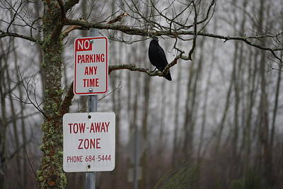 Crow Asking For A Citation In Magnuson Park In Seattle Art Print by Shirley Stevenson Wallis