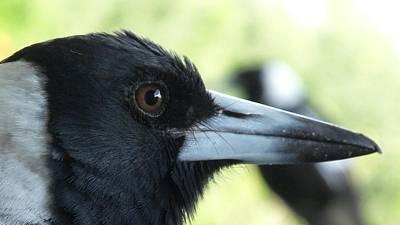 Magpies Digital Art - Crow by Bert Mailer